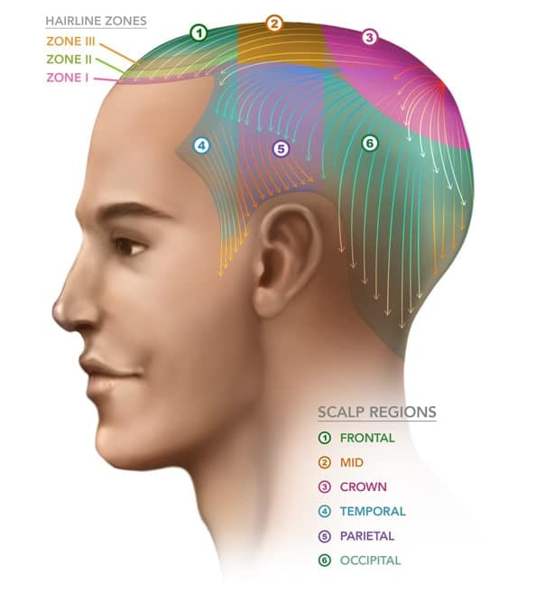 Scalp Regions - ILHT Dubai